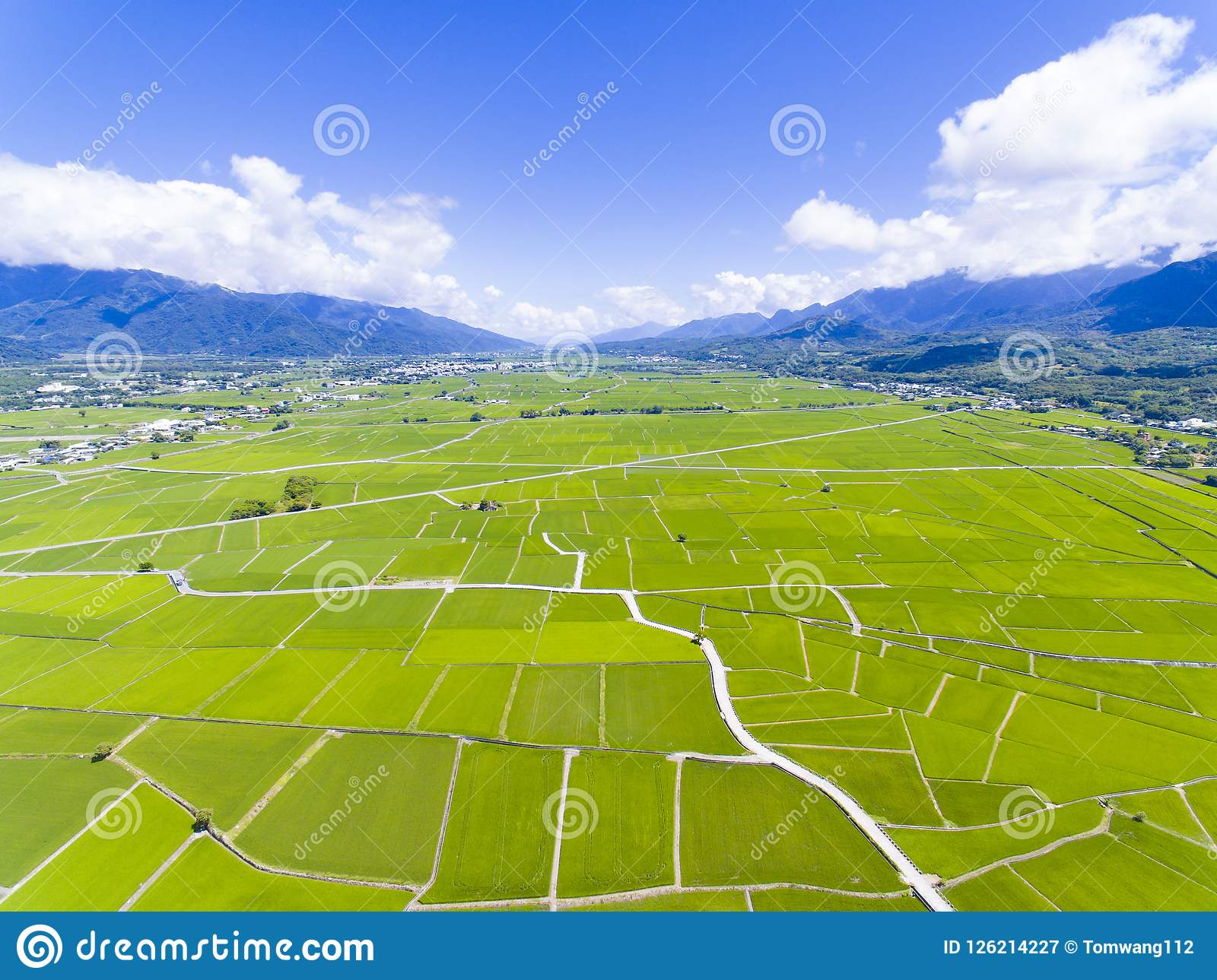 Aerial view of rice field valley. taiwan.