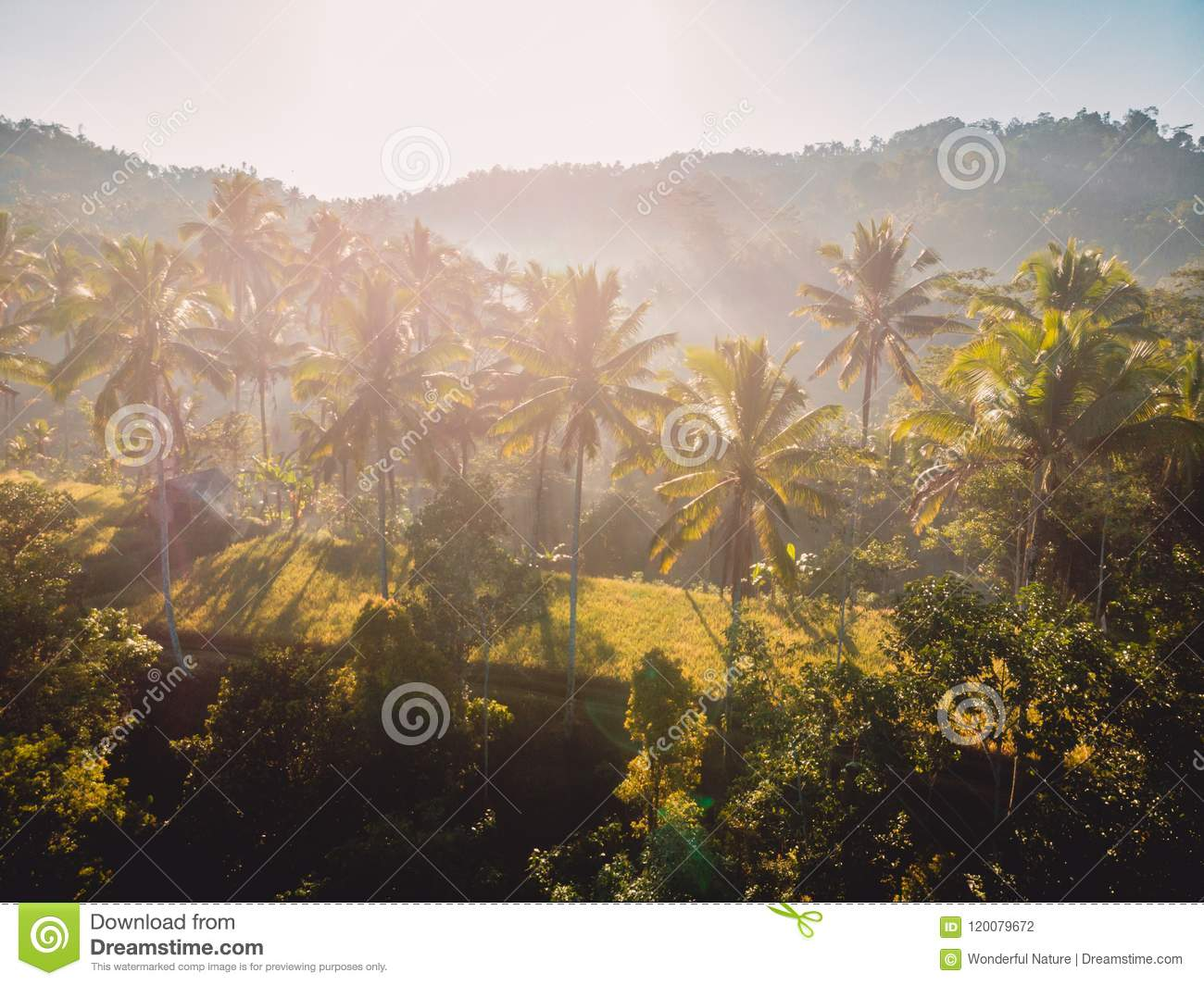 Aerial View Of Rise Terraces With Tropical Coconut Palms ...