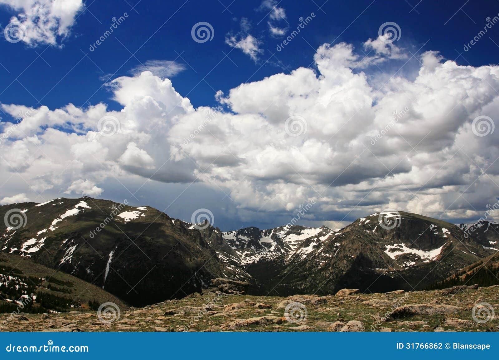 Mountain Avens