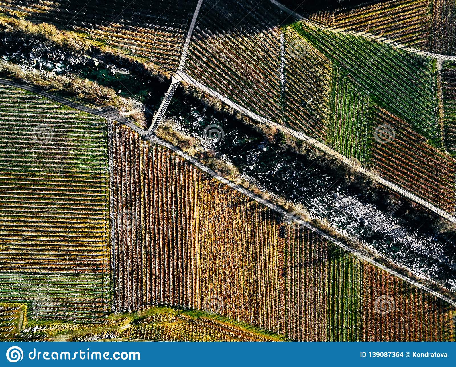 Aerial view of vineyard fields during winter in Italy