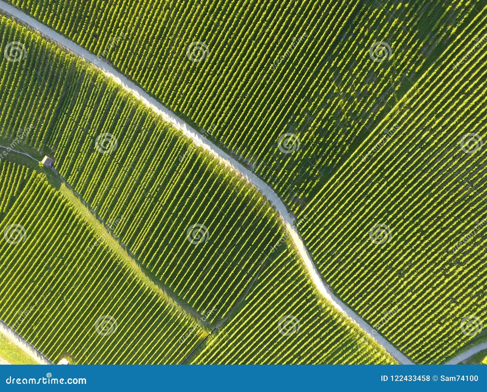 Aerial of Vineyard fields between Lausanne and Geneva, Switzer