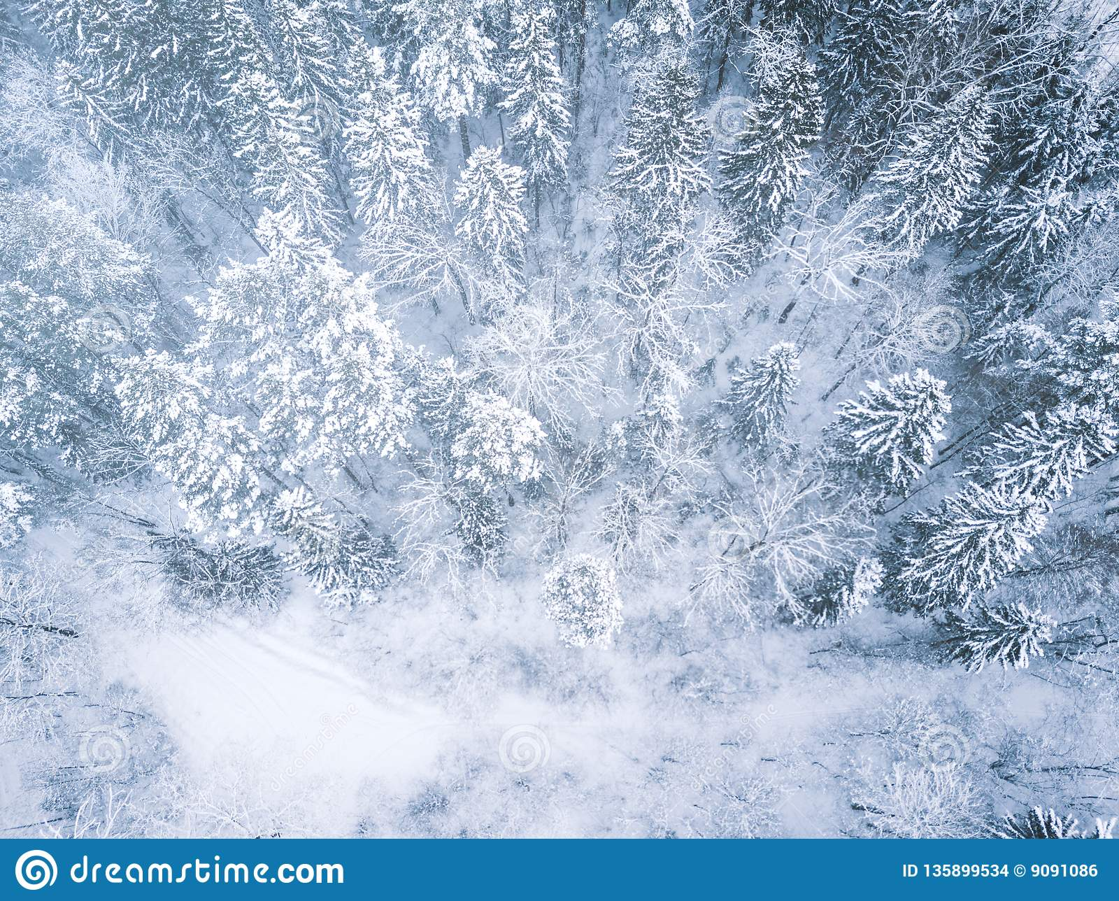 Aerial Winter Forest View Drone Landscape Fly Above