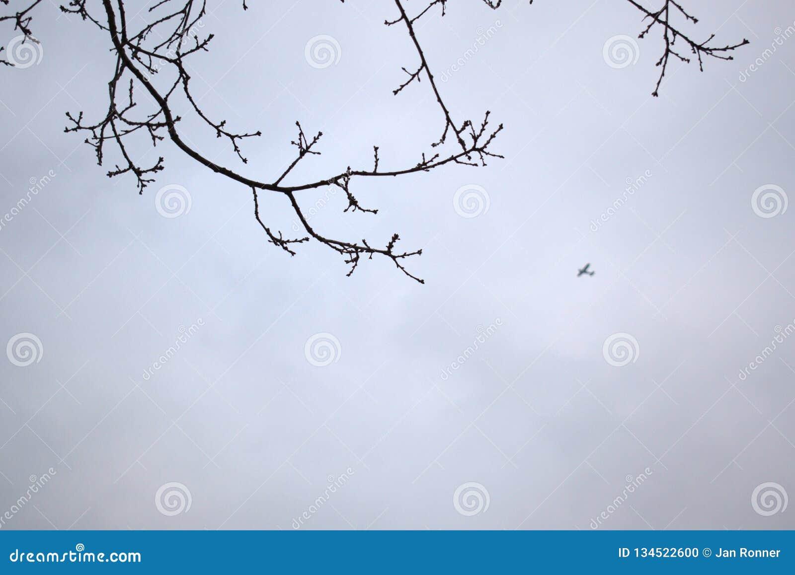 Aeroplano que vuela encima