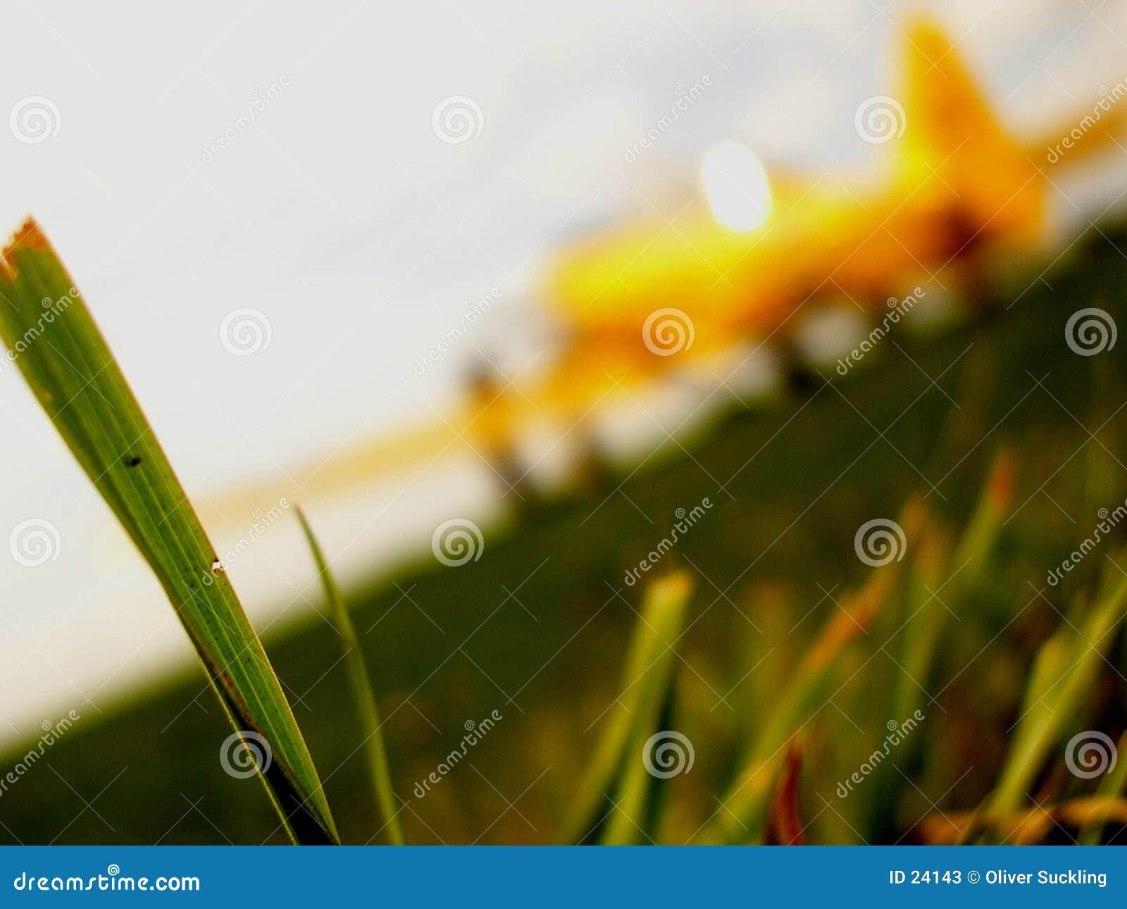 Aeroplano su una pista dell erba