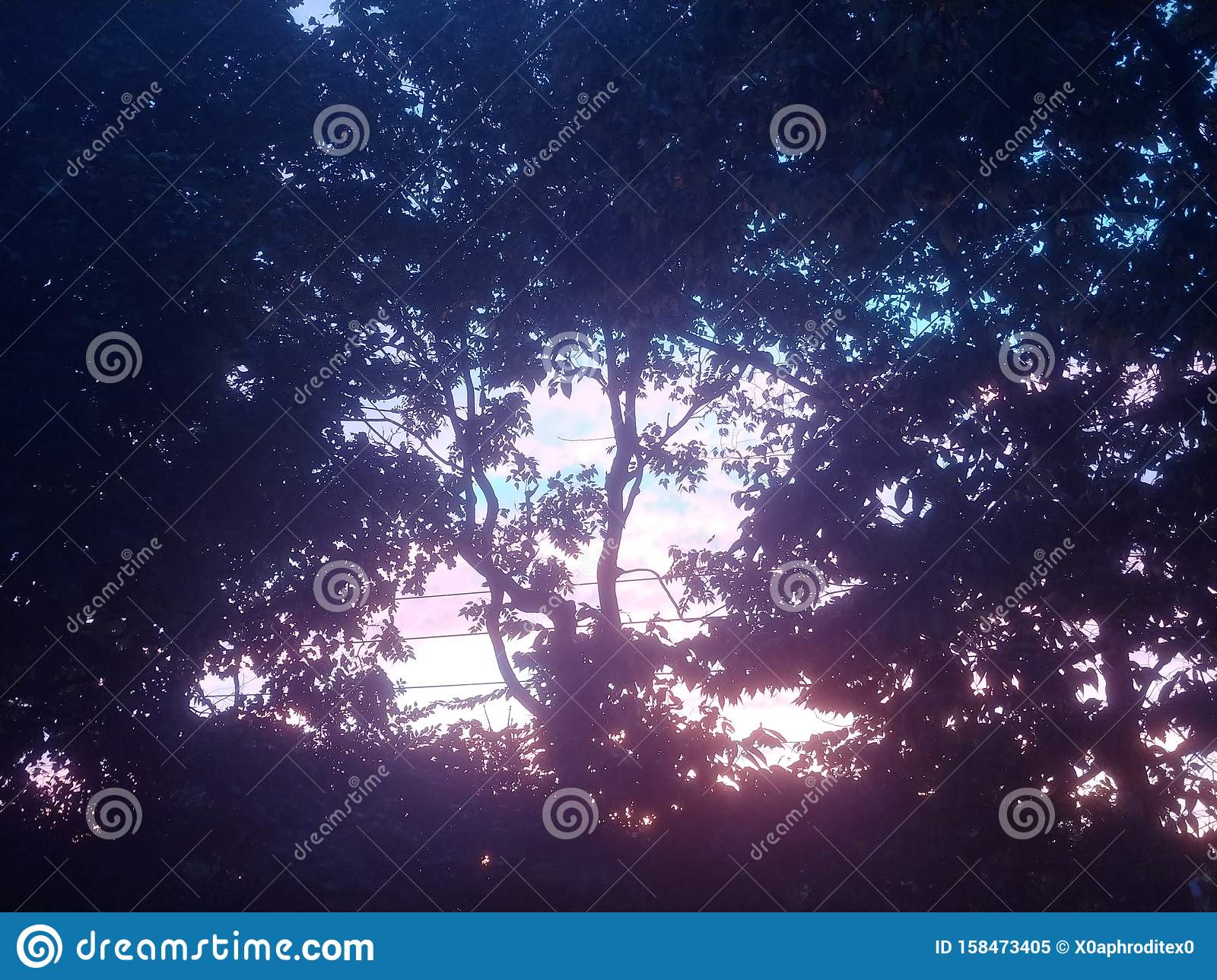 Aesthetic Colorful Tree Cotton Candy Sky Stock Image Image Of Tree Aesthetic 158473405