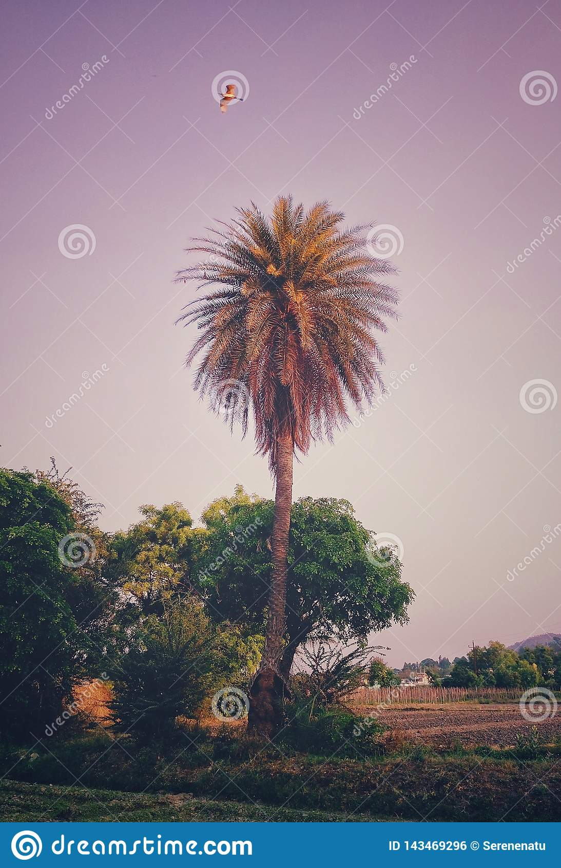 An aesthetic image of a palm tree with an eagle flying on top of it..