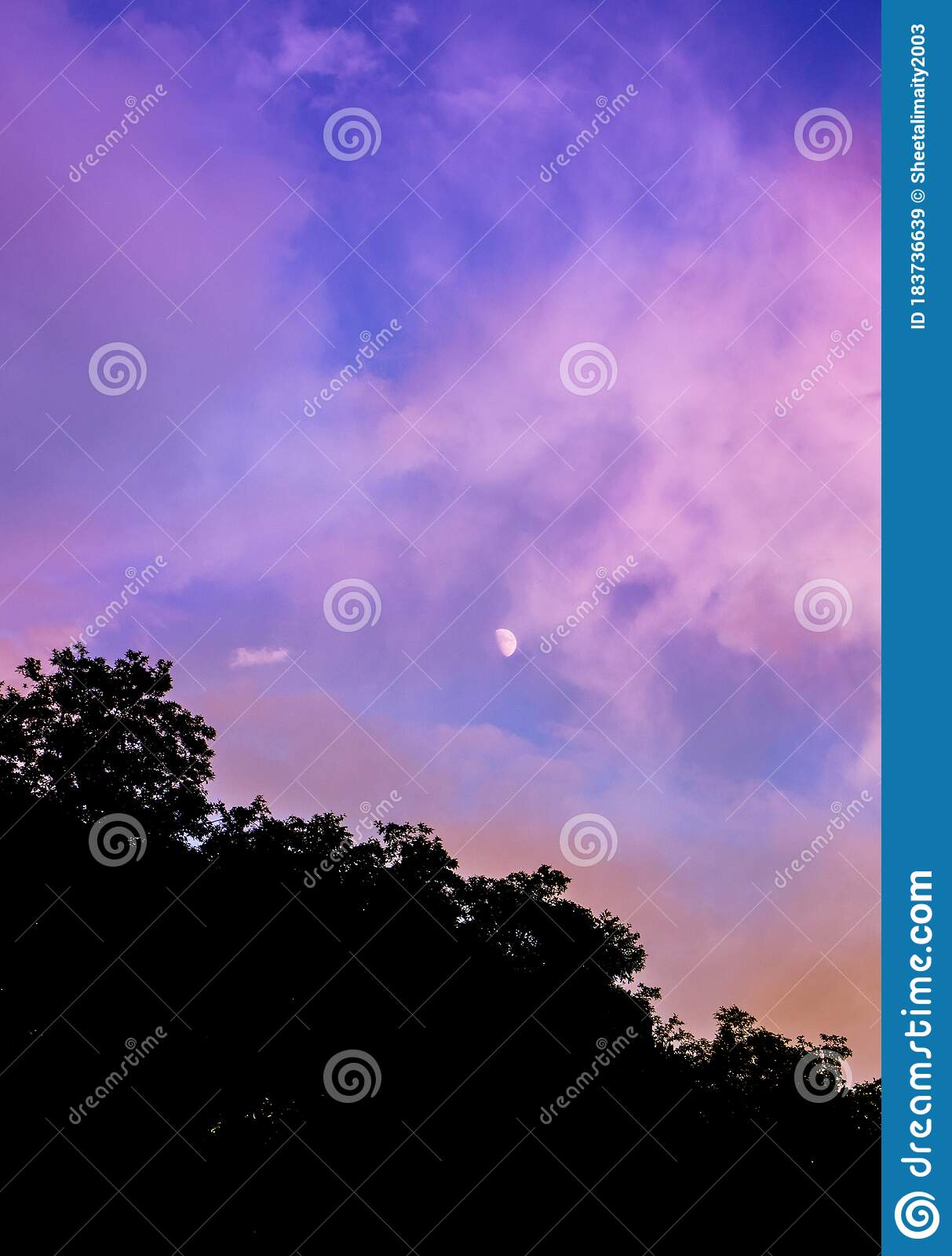 7 903 Purple Tree Silhouette Photos Free Royalty Free Stock Photos From Dreamstime