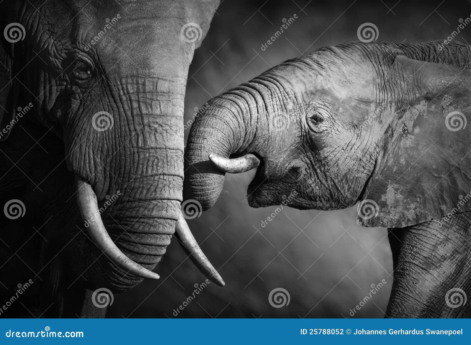 Afeição do elefante (processamento artístico)