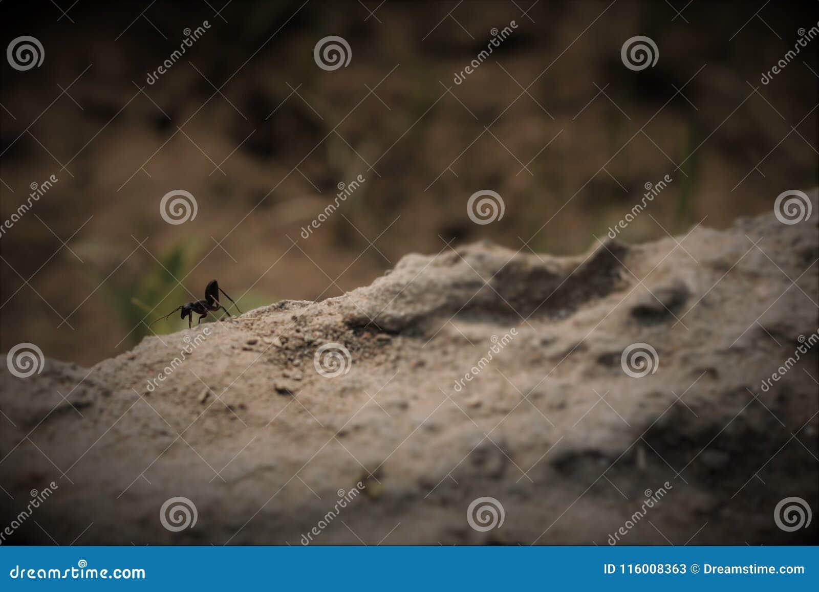 Affärsföretag för myra` s