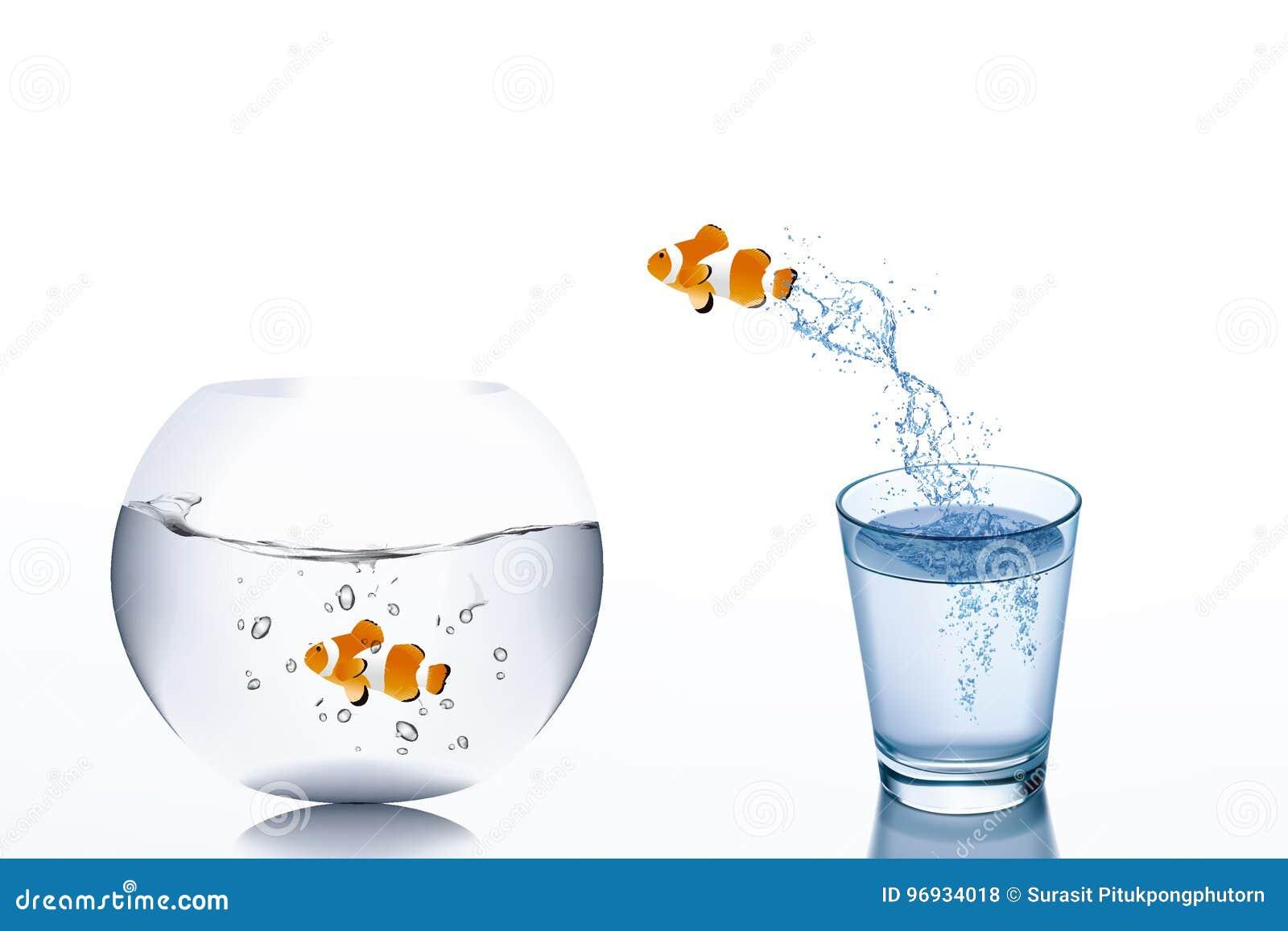 Affärsutmaning och tillväxtbegrepp: Guldfiskflykt från vatten i den glass banhoppningen till fishbowl