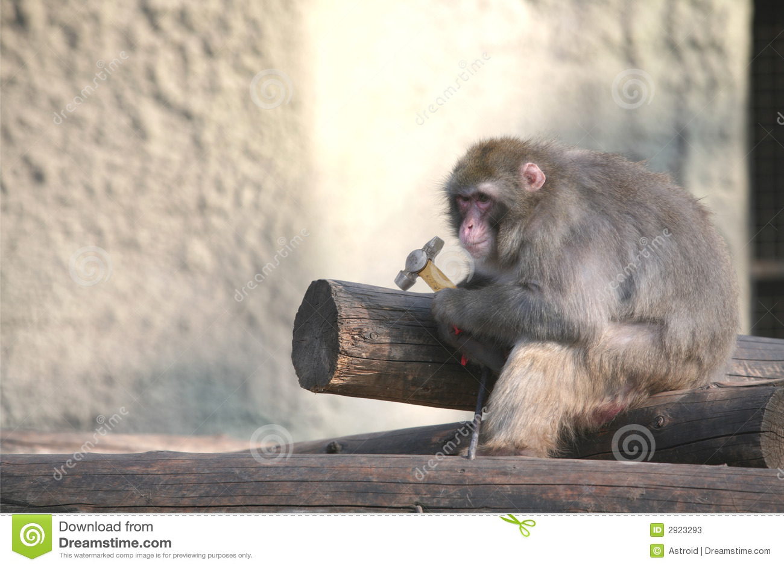 Affe auf Aufbau, Fallhammer