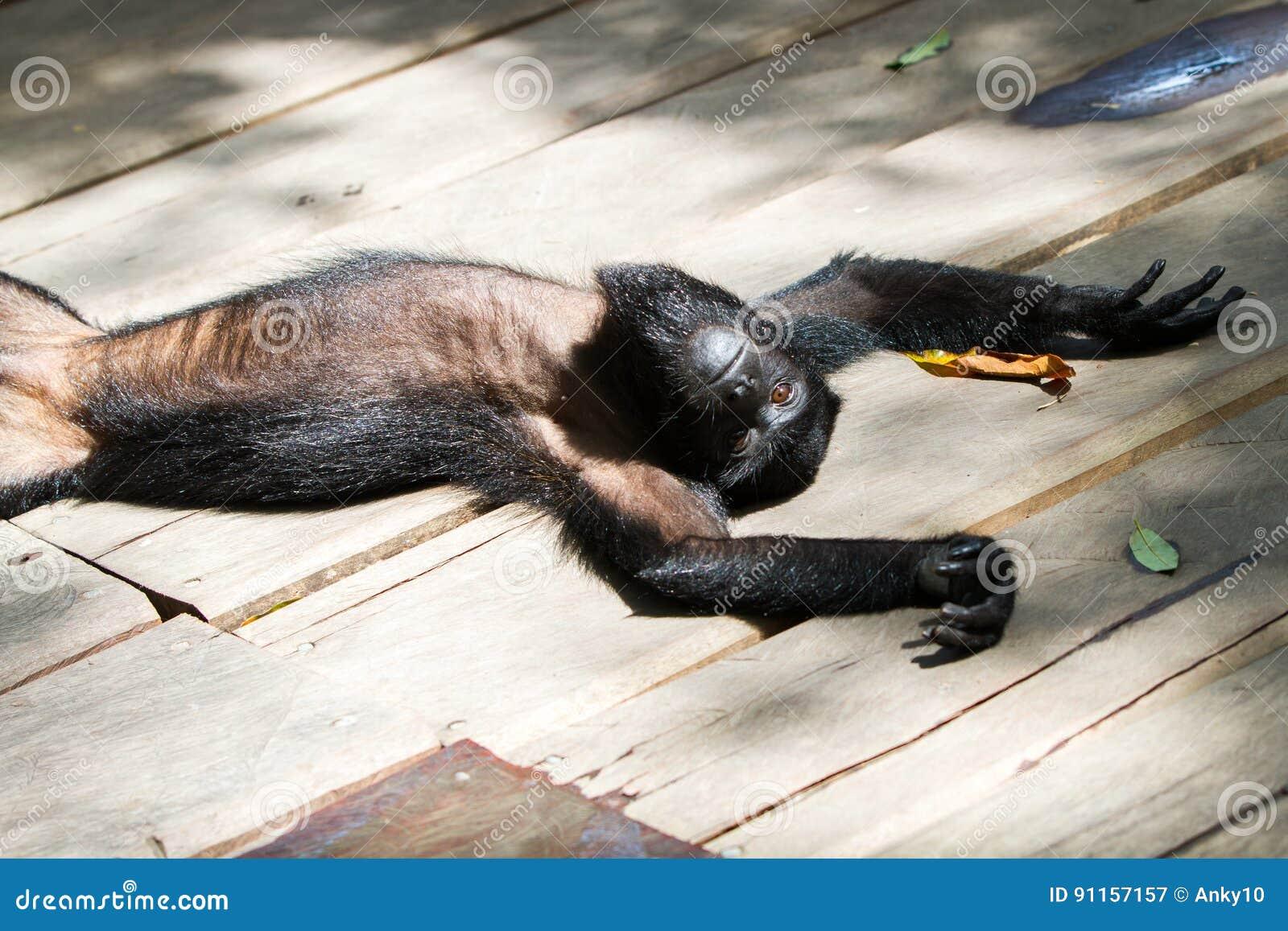 Affe in der Sonne stockbild. Bild von wenig, lustig, blau - 91157157