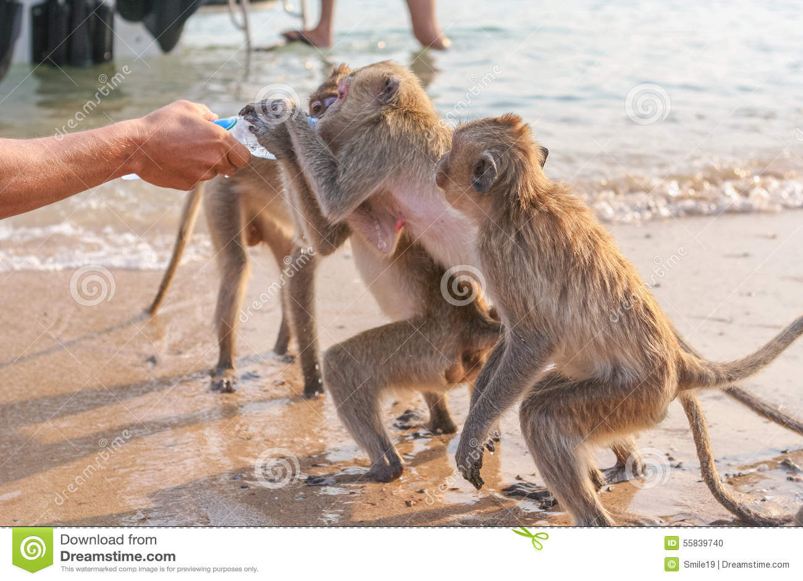 Wasser Affe