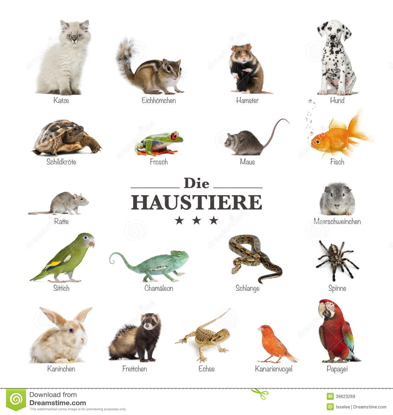 affiche des animaux familiers en allemand image stock image 39623269. Black Bedroom Furniture Sets. Home Design Ideas