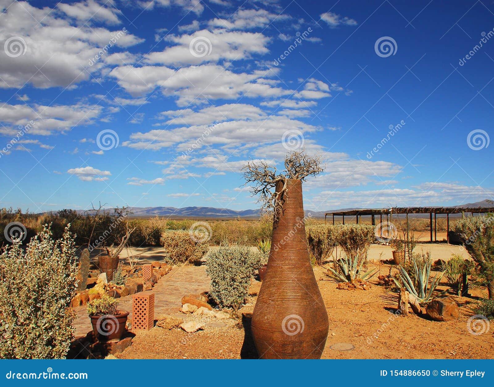 Africa A Beautiful Desert Garden Under An Amazing Sky Stock Photo