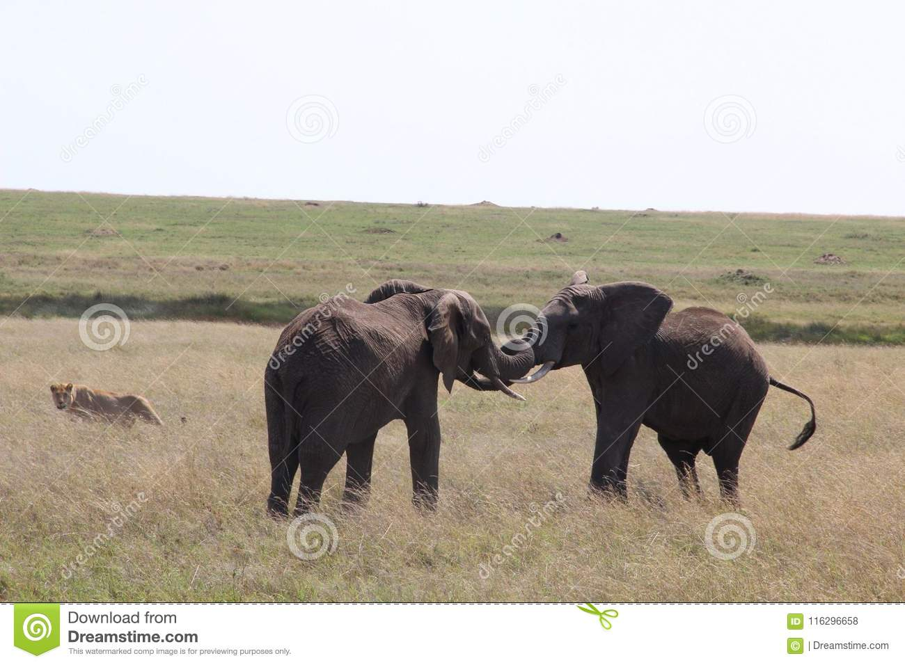 Africa Flash McTours And Travel Editorial Stock Photo - Image of