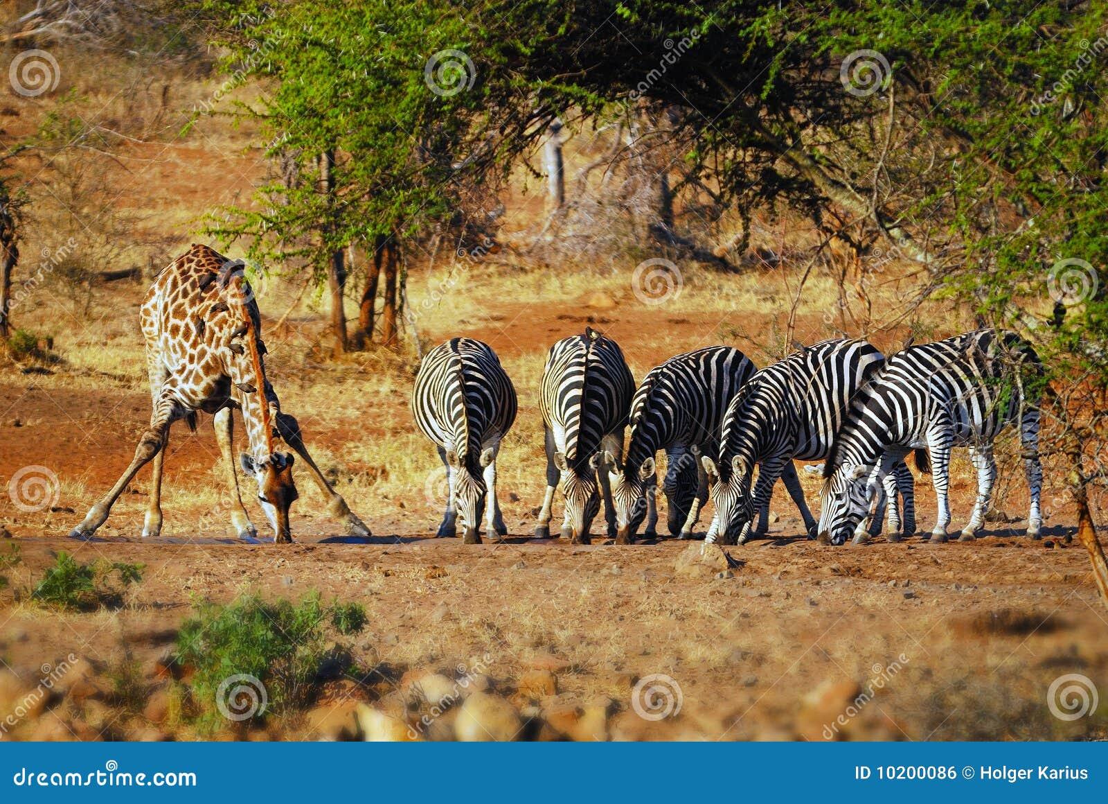 Africa południe waterhole