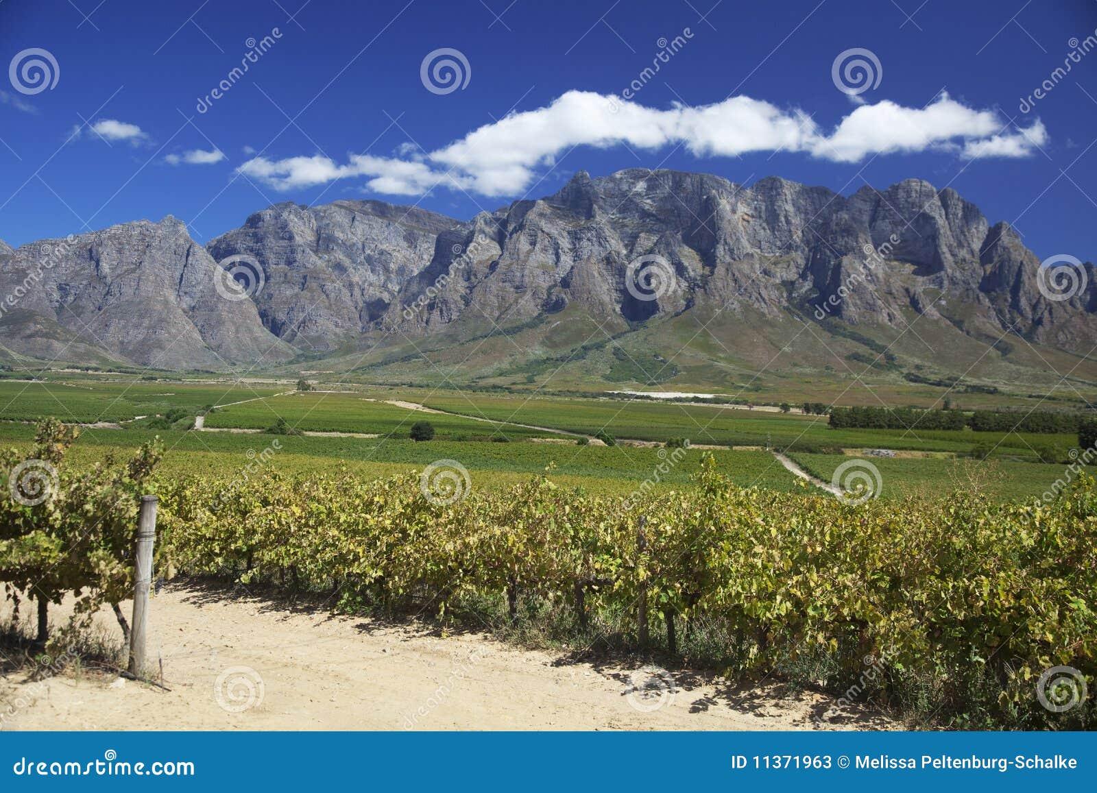 Africa południe winnica