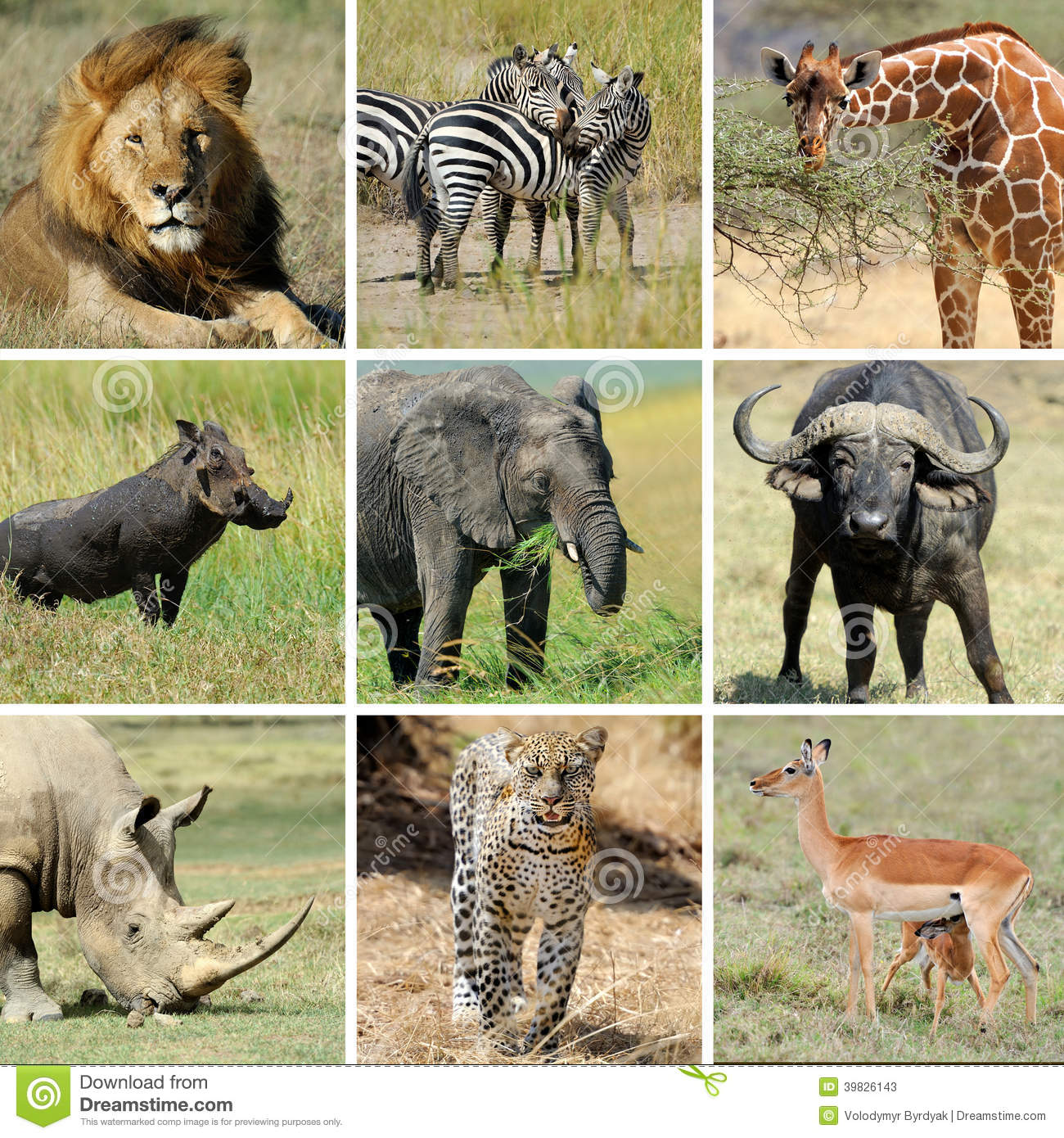 African Animal Collage Stock Photo - Image: 39826143: www.dreamstime.com/stock-photos-african-animal-collage-nine...