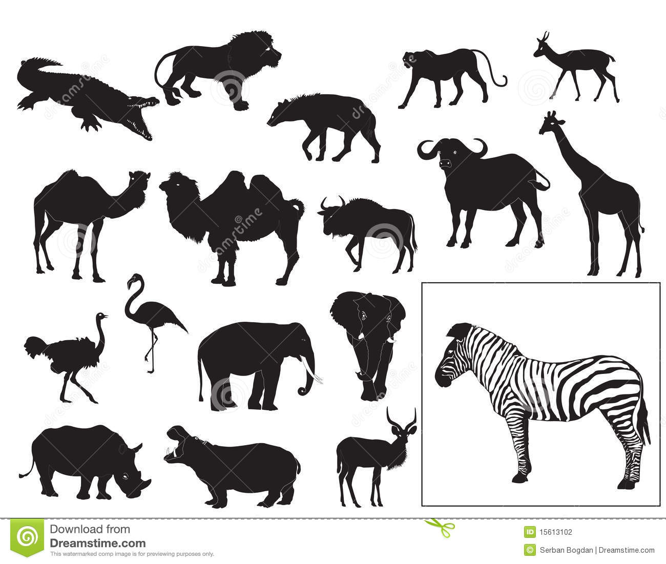 African Animals Collection Stock Photography Image 15613102