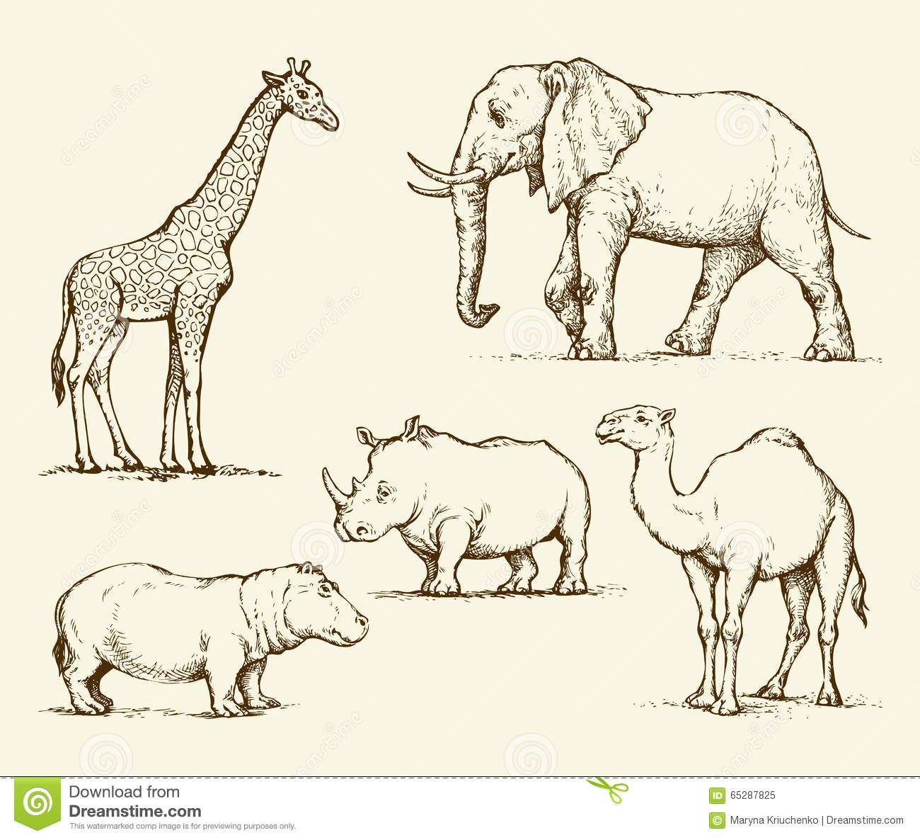 Line Drawings Of African Animals : African animals vector drawing stock image
