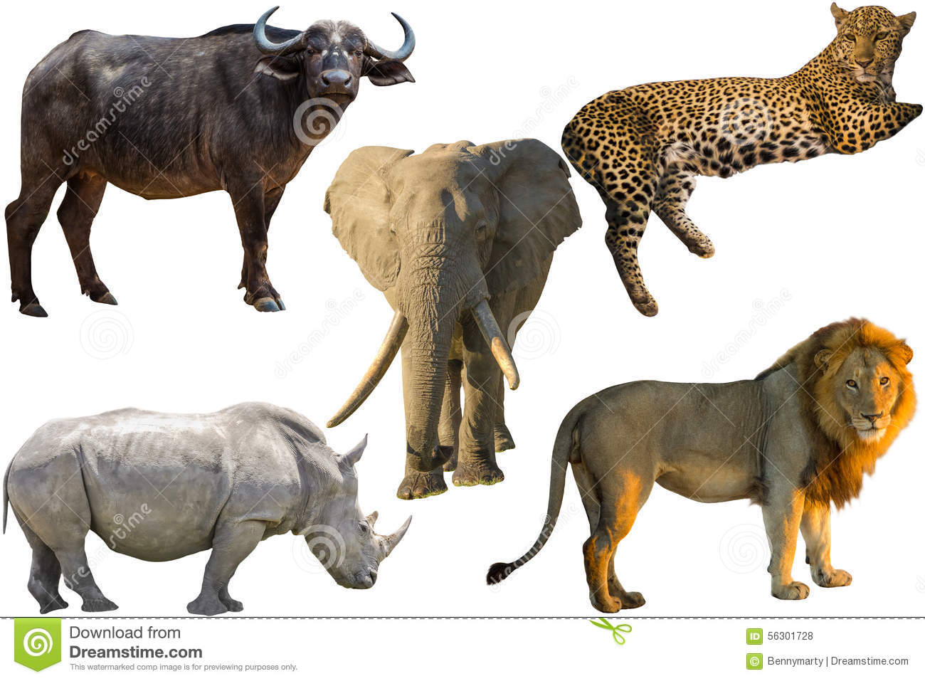 African Big Five animals, Buffalo, Elephant, Leopard, White Rhino and ...