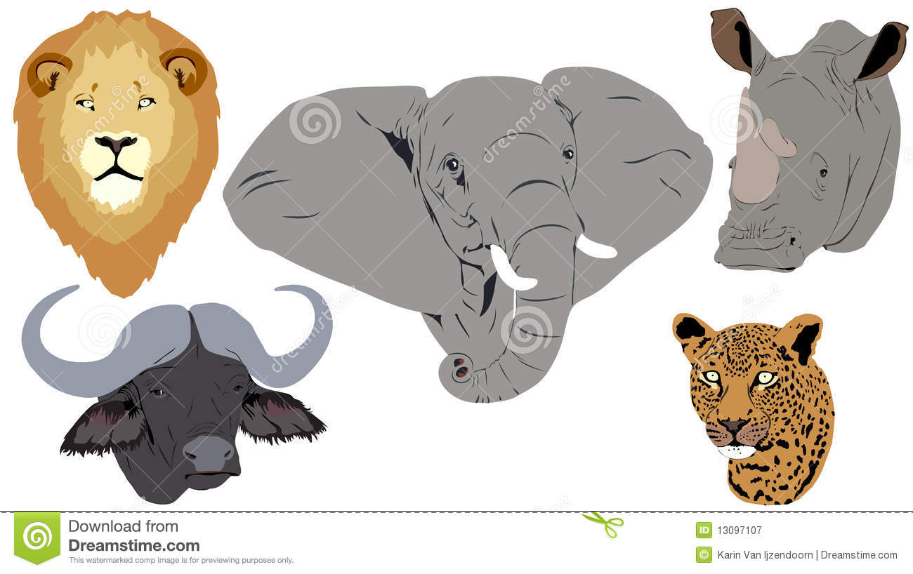 African Big Five heads