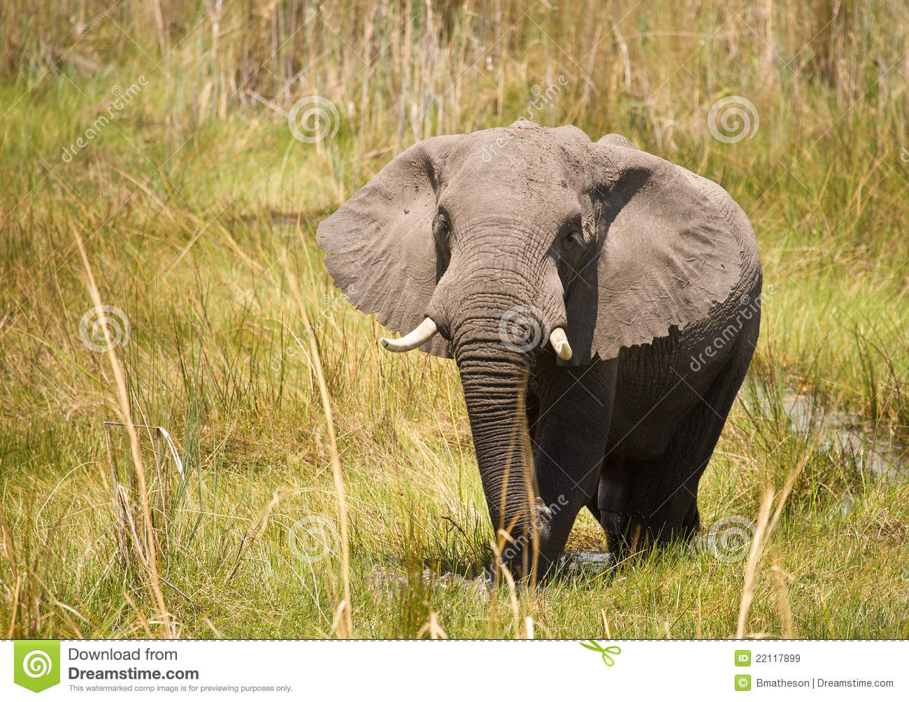 life span of the asian elephant
