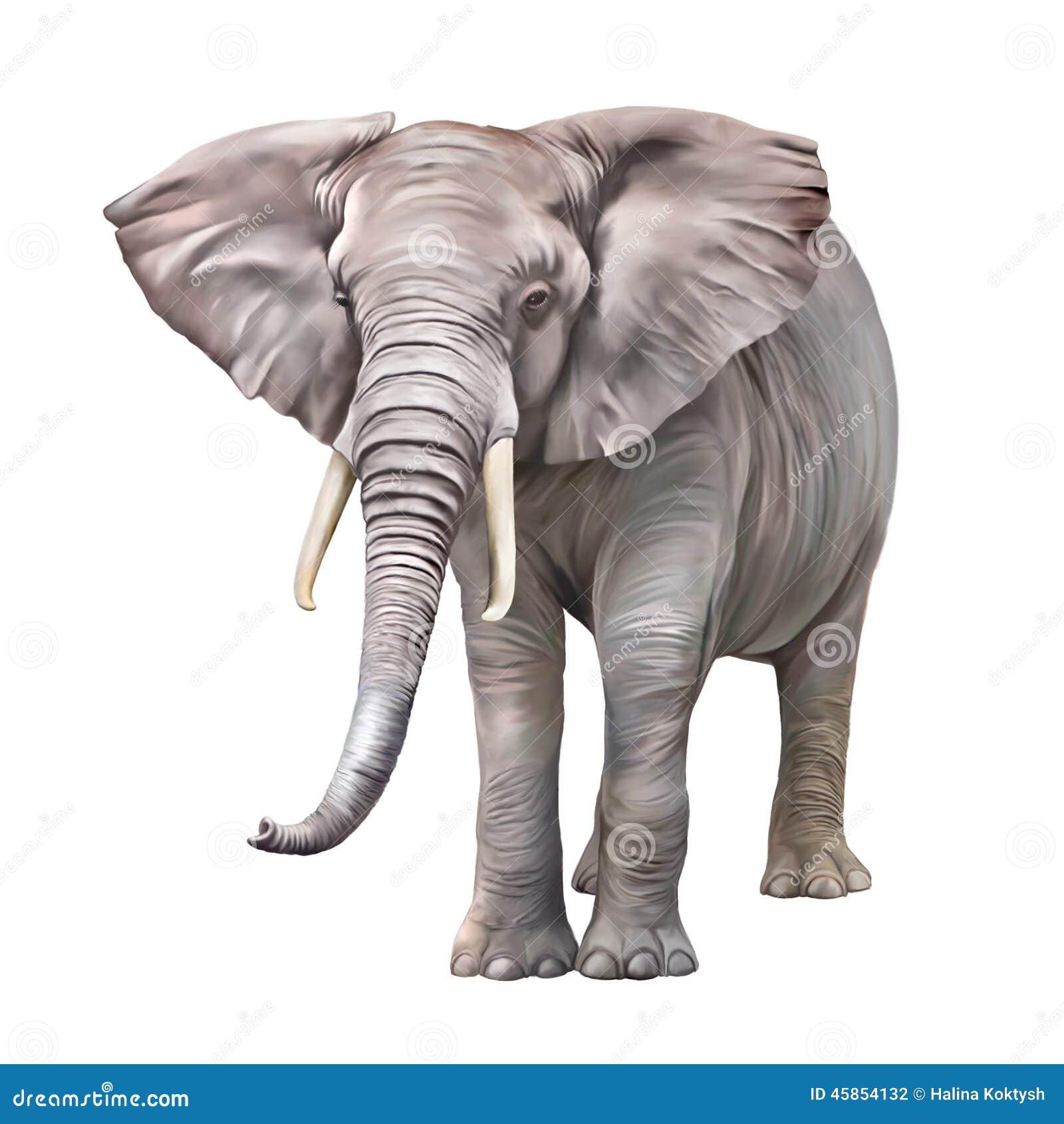 African Elephant, Loxodonta Africana Stock Illustration