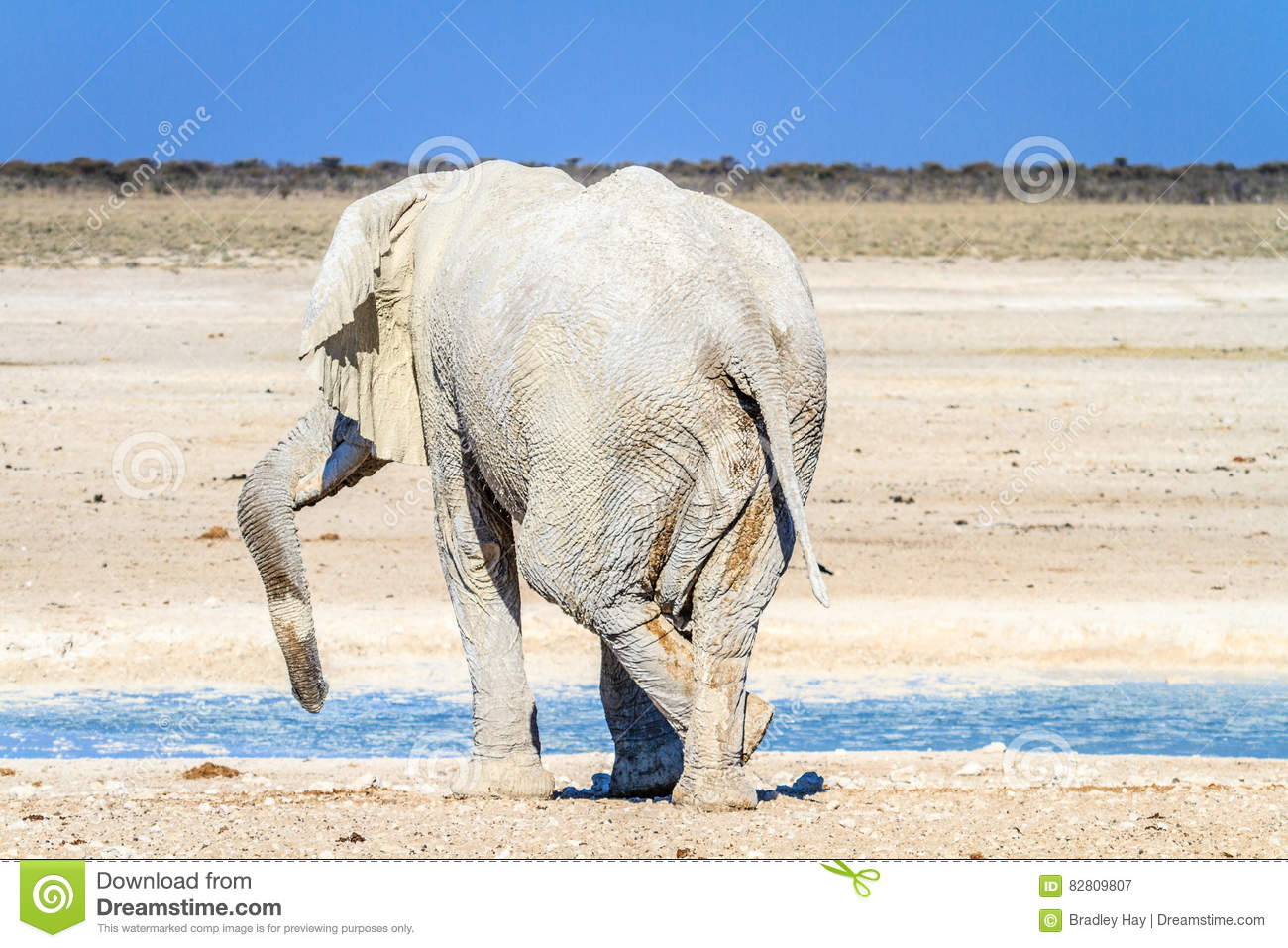 African elephant relaxing at waterhole in Etosha National Park, Namibia, Africa