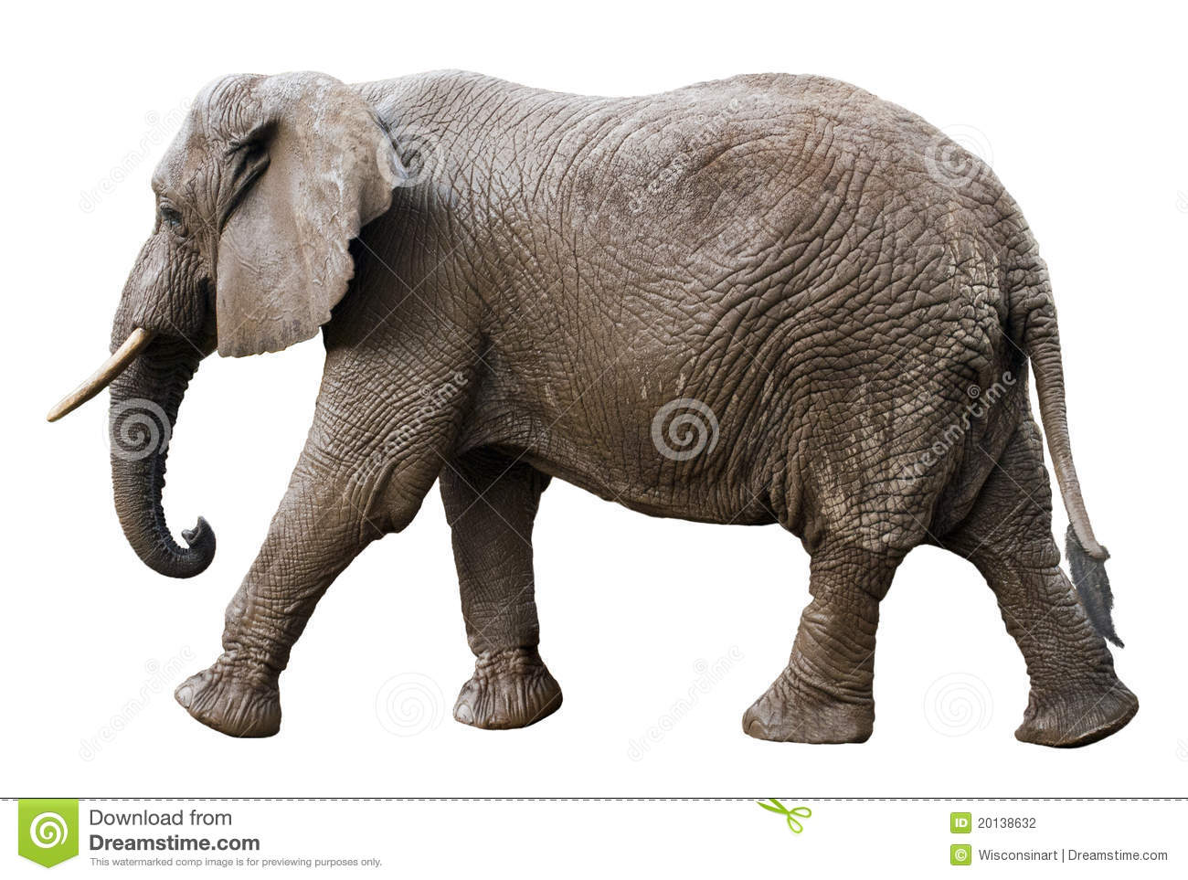 African Elephant Side View Isolated on White