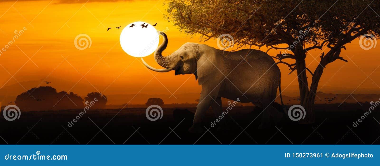 African Elephant Sunset Scene Web Banner