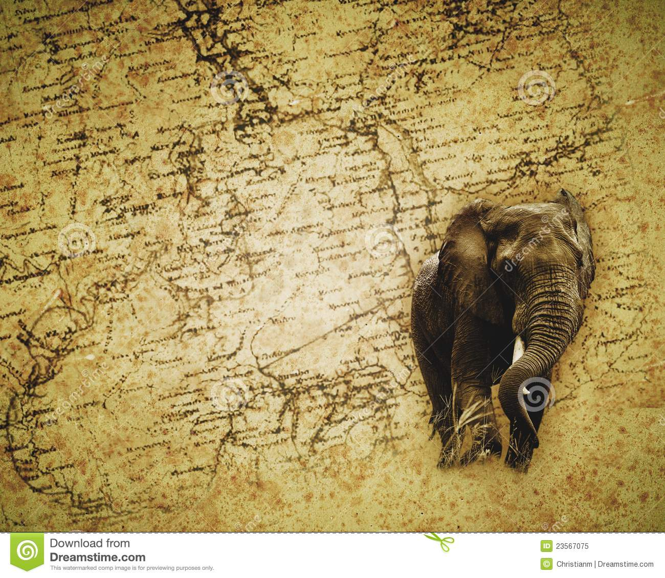 African Elephant wallpaper stock image Image of destination 23567075