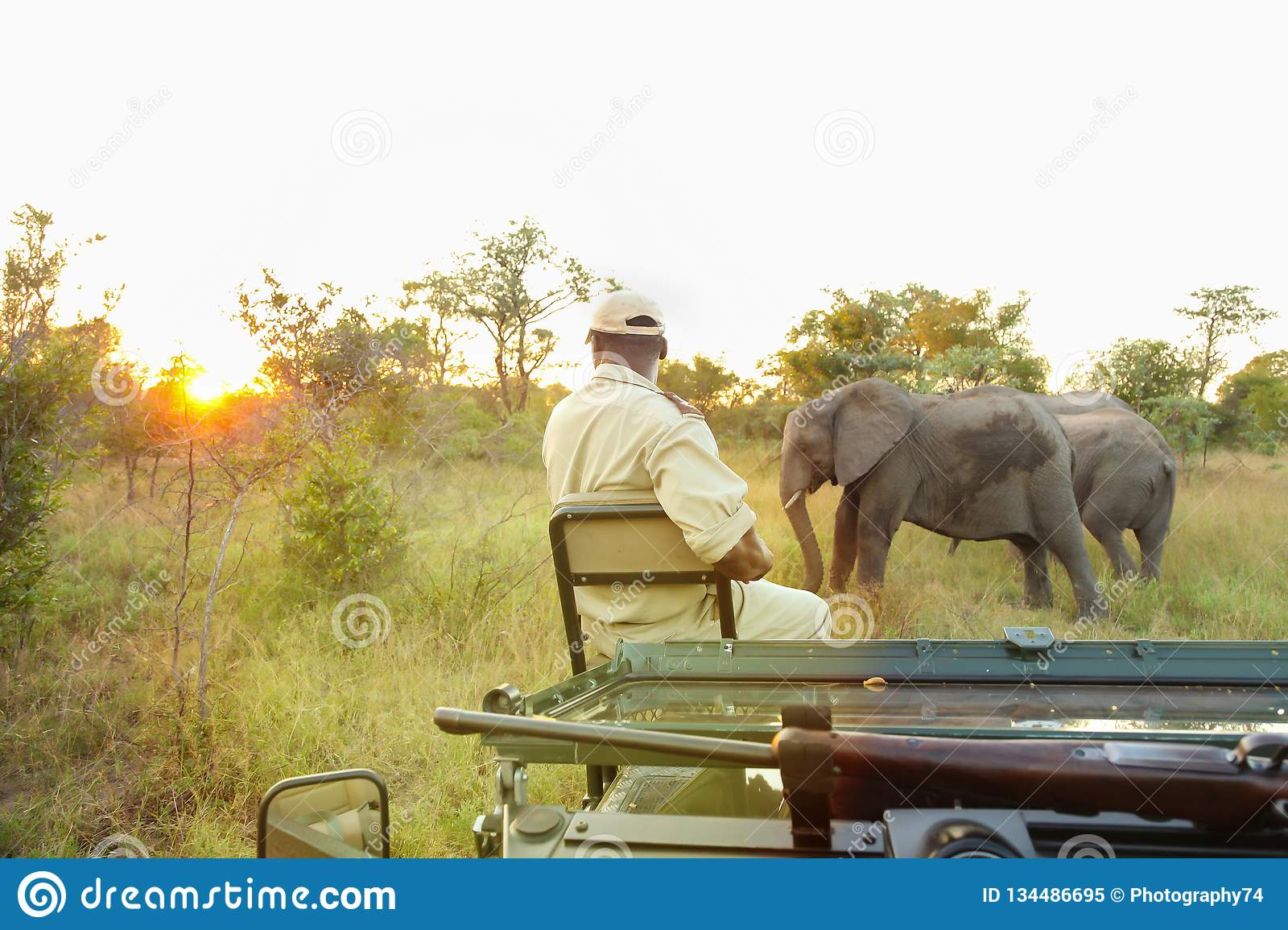 African Elephants in South African game reserve