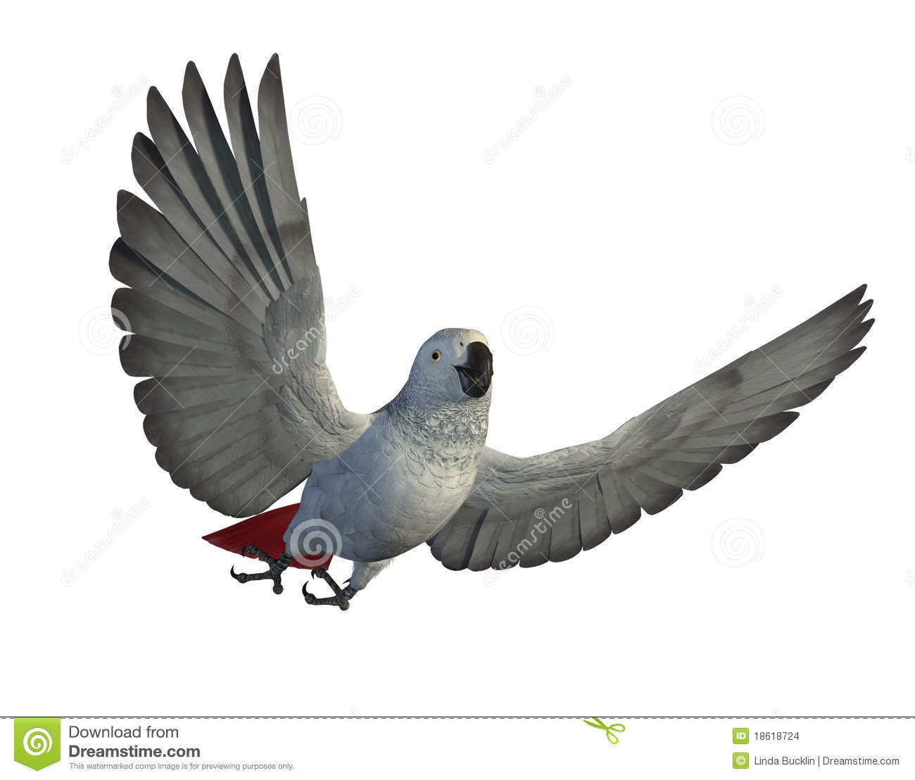 African Grey Parrot Flying Stock Images - Image: 18618724