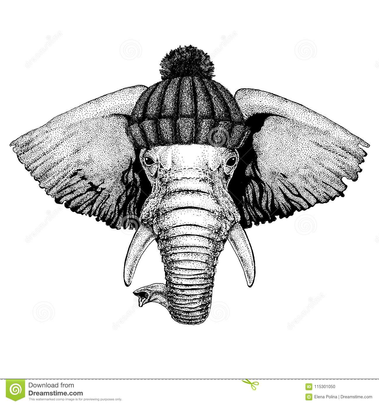 African Or Indian Elephant Cool Animal Wearing Knitted Winter Hat ...