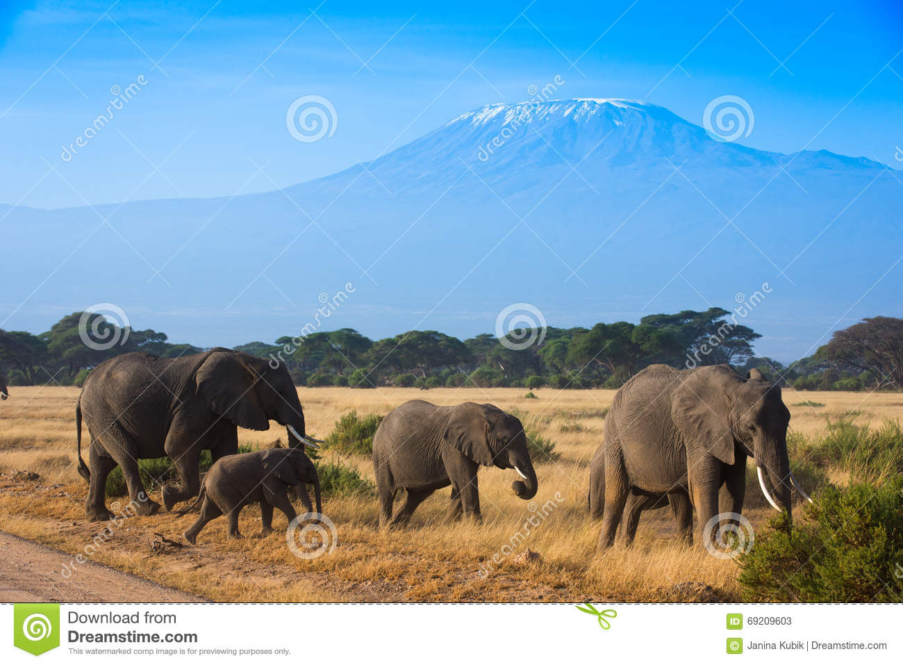 African mountain animals - Royalty Free Stock Photo Download African Landscape With Elephants And Kilimanjaro Mountain