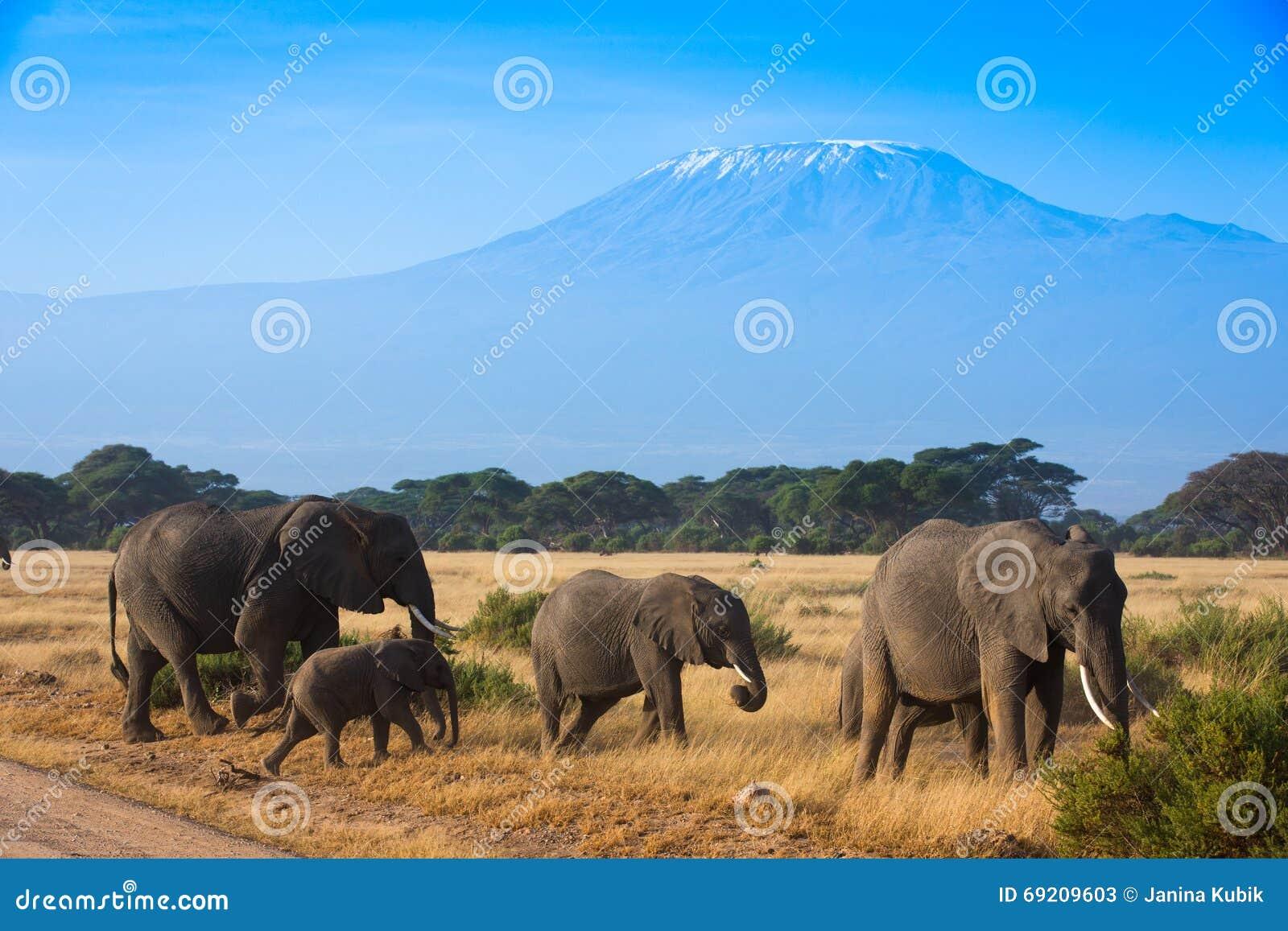 African mountain animals - African Animals Elephants Kilimanjaro Landscape Mountain