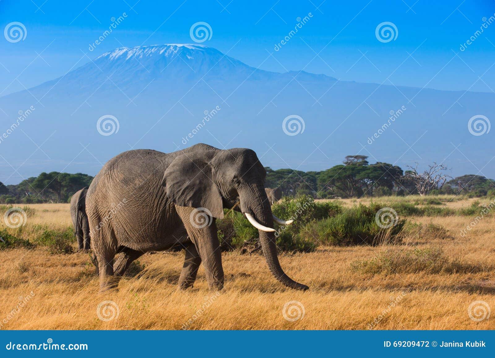 African Mountain Animals - African animals kilimanjaro landscape mountain