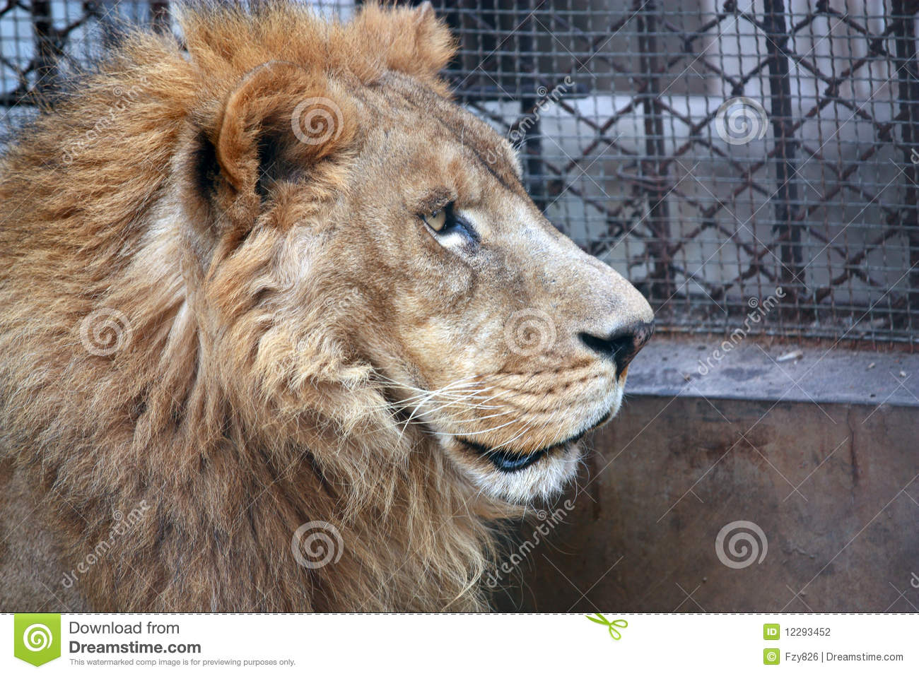 African Lion-side Face Stock Photography - Image: 12293452