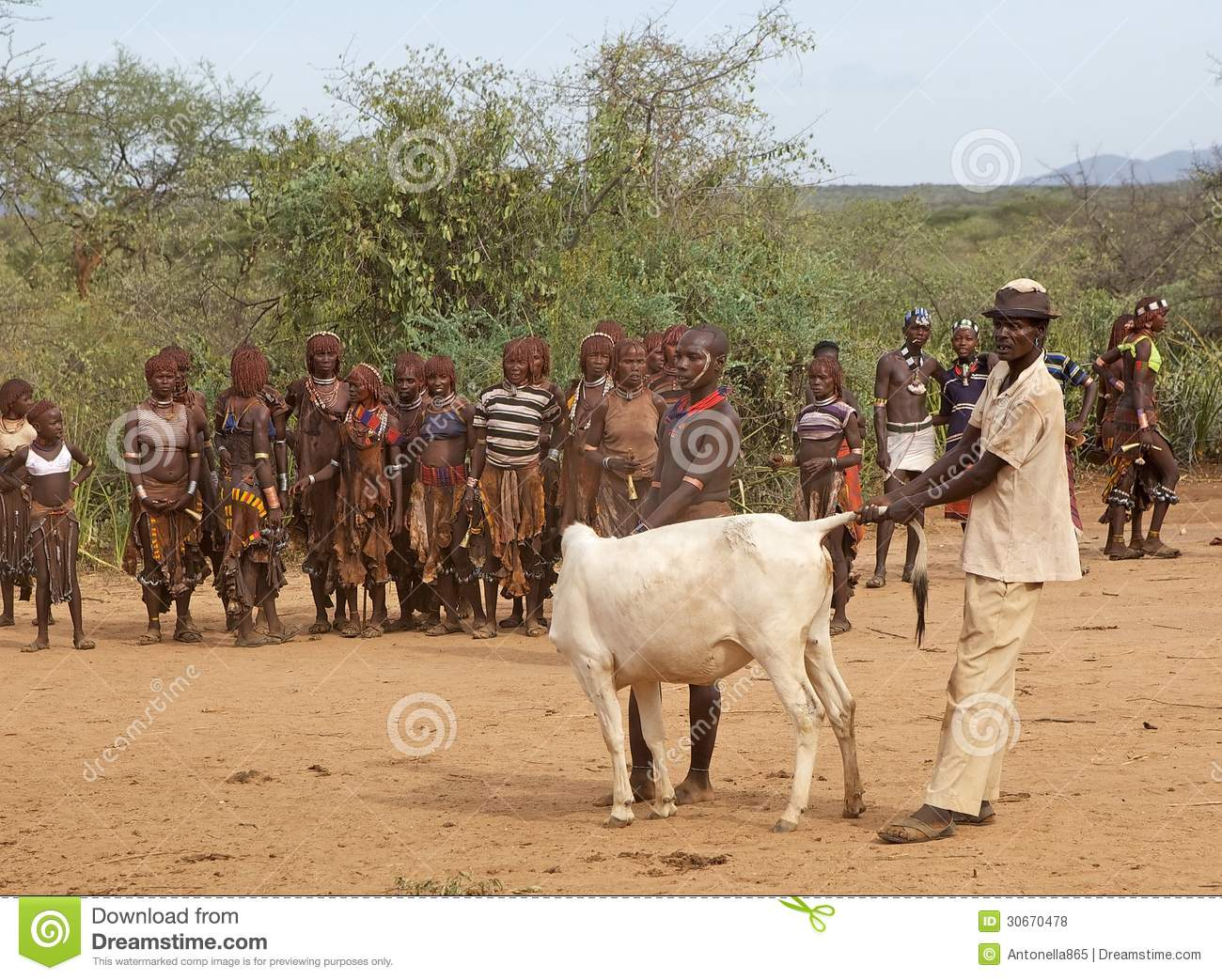 African Men And Cattle Editorial Stock Photo Image Of