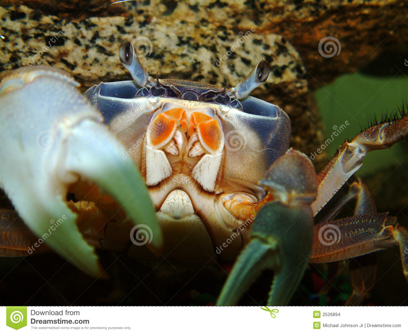 African Moon Crab Stock Images - Image: 2526894