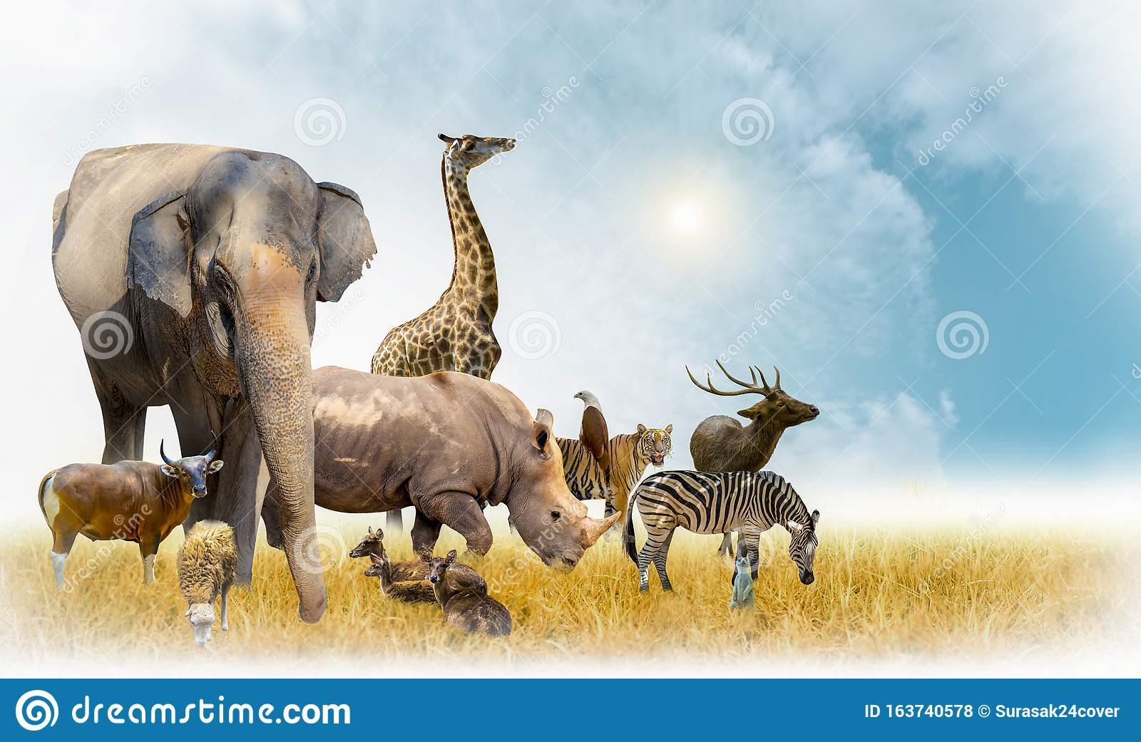 African Safari And Asian Animals In The Theme Illustration Filled With Many Animals A White Border Image Stock Photo Image Of Hunter Isolated 163740578