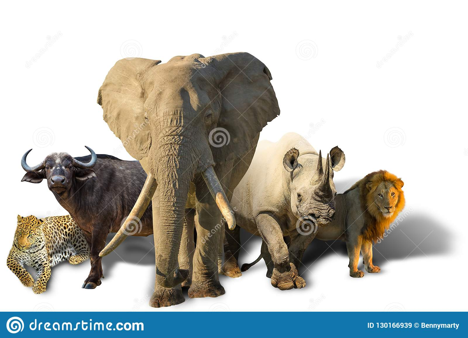 African Big Five isolated