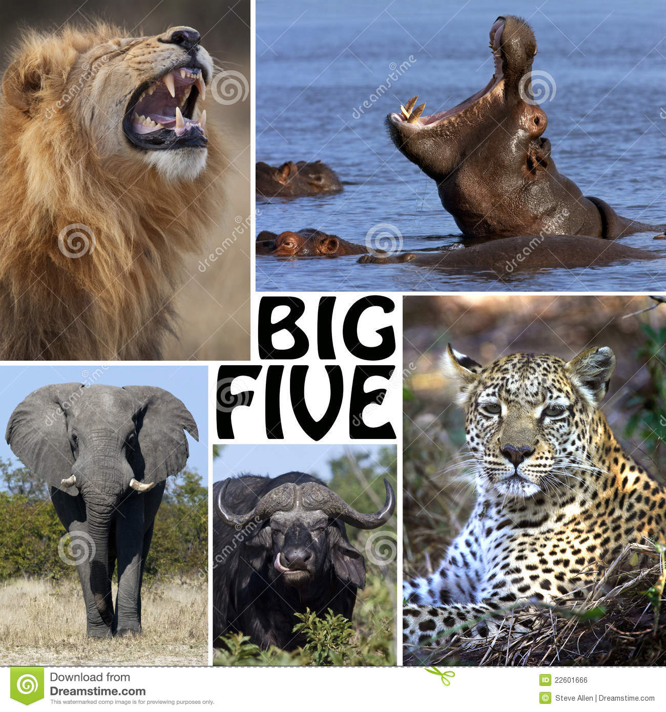 african safari montage the big five botswana stock photo image of pachyderm nature 22601666. Black Bedroom Furniture Sets. Home Design Ideas