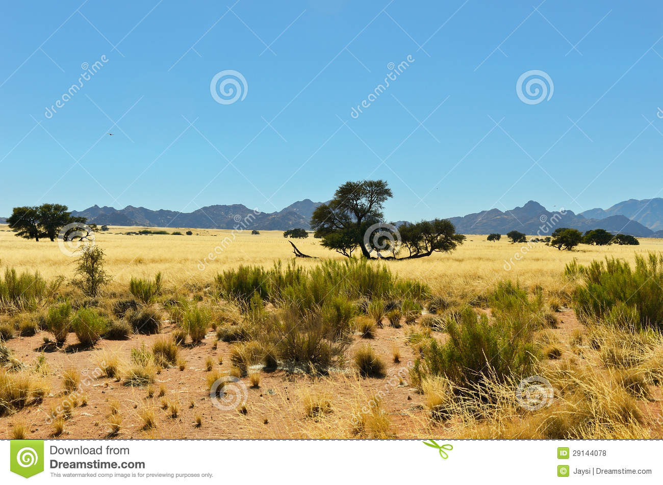 Photo tour of the savannas and mountains of South Africa 81