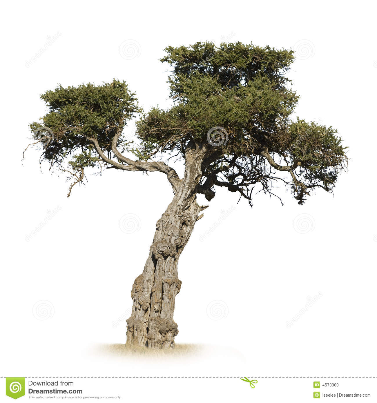 African Tree Stock Photo Image 4573900