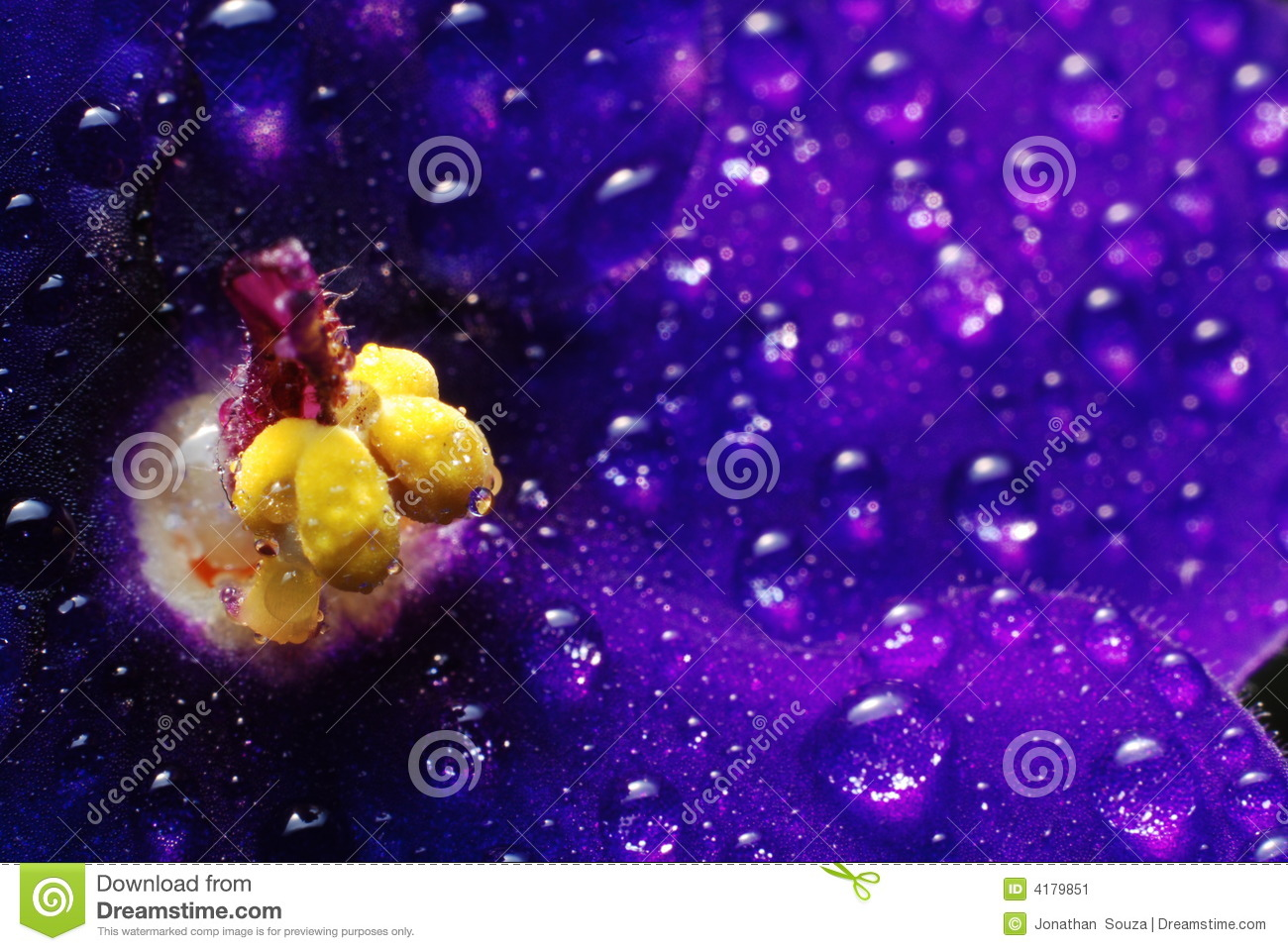 African Violet with droplets 02