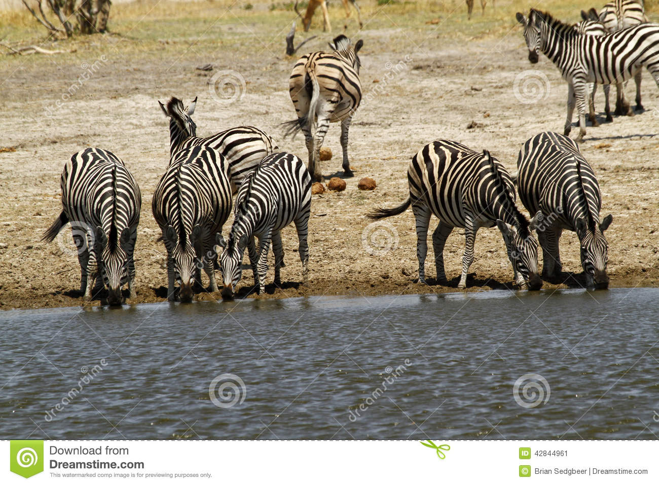 African Watering Hole Safari Highlights