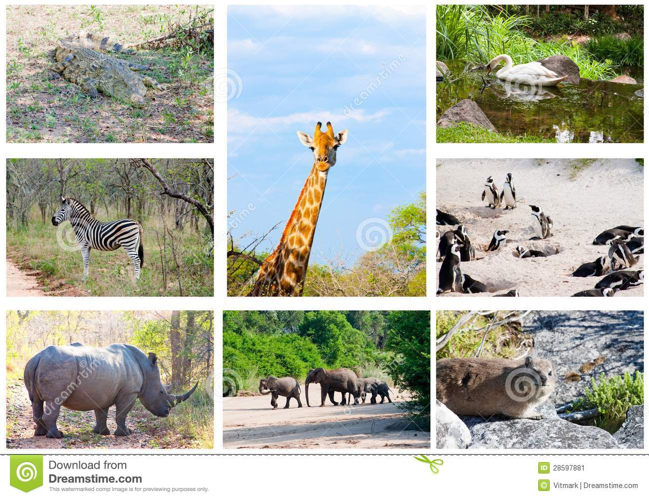 Wild Animals Collage Stock Images